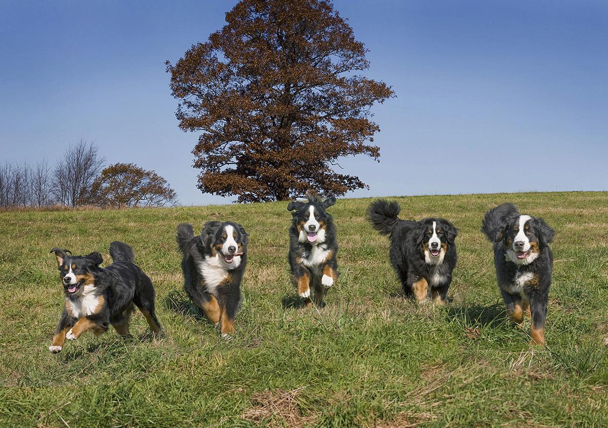 Dakota, Cubby, Sophie, Harmony & Hobo