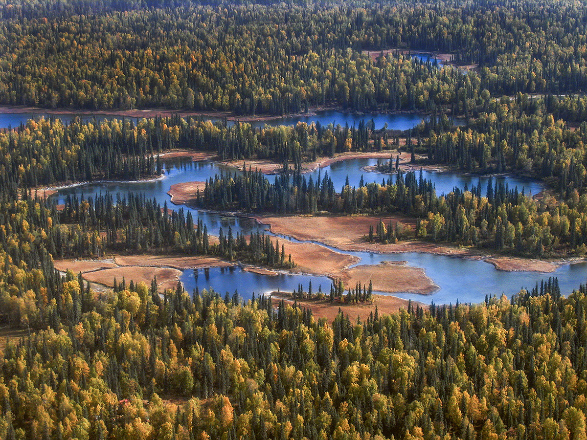 Denali Forest, Alaska