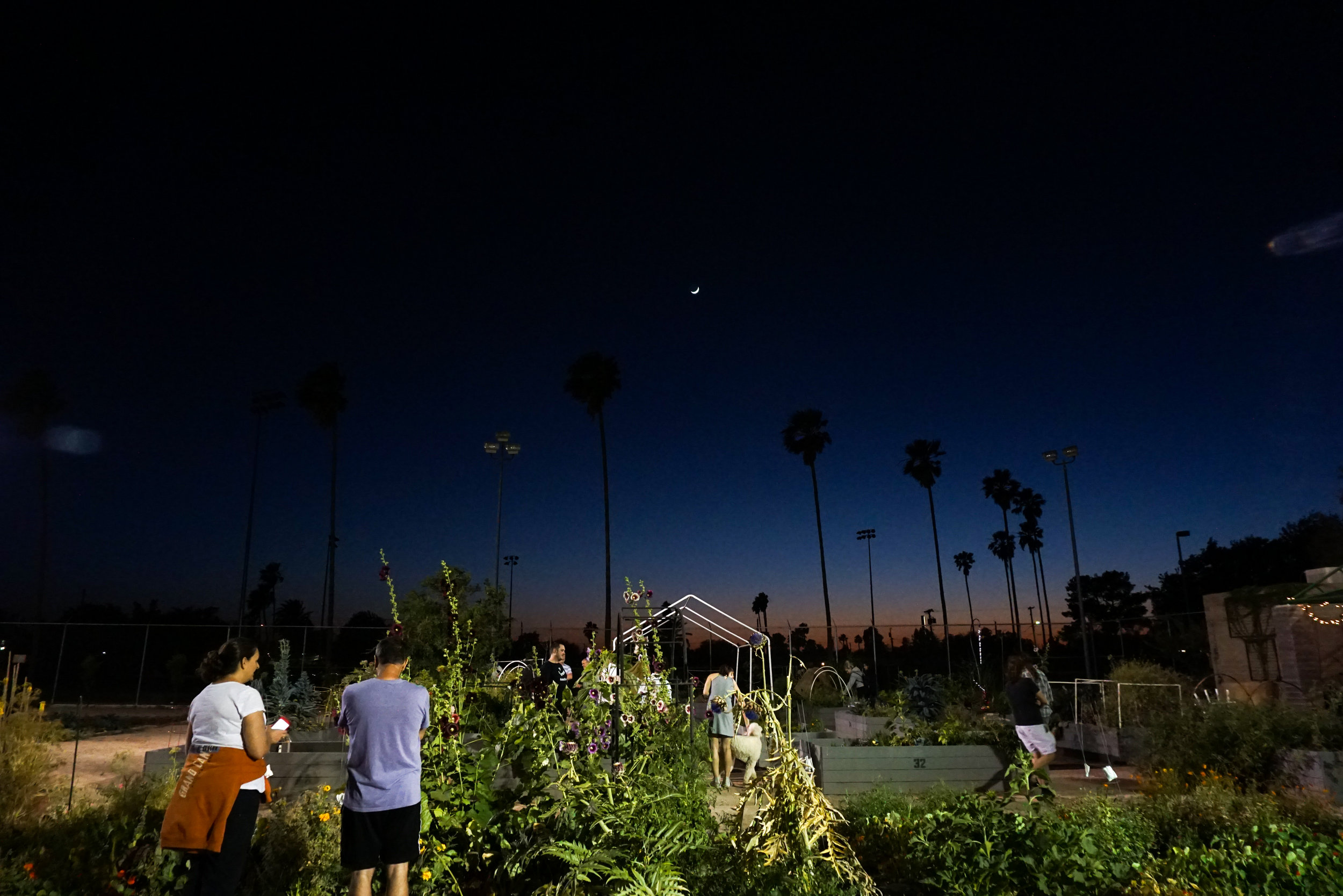 Garden Ecologies - photo by Rebecca Greenberg
