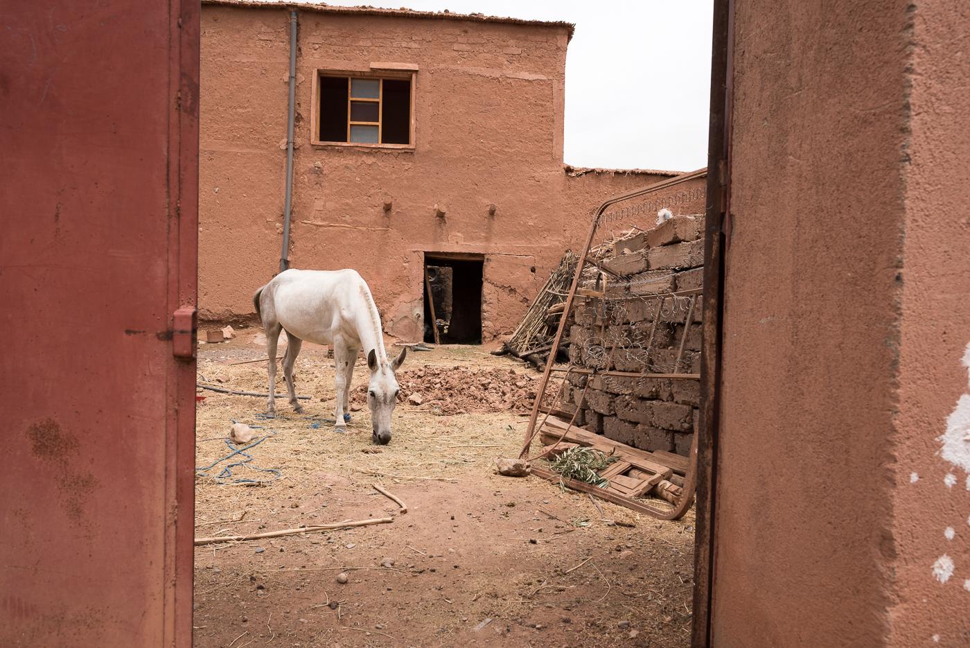 philipp schäbler marokko marrakesch essaouira-8481.jpg