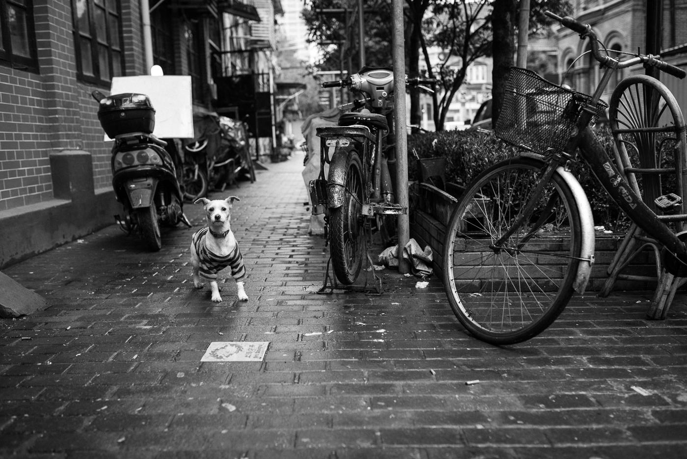 philipp schäbler shanghai china-4080.jpg