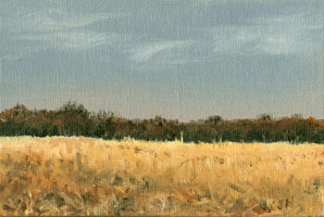 cornfield_on_olivegreen_rd.jpg