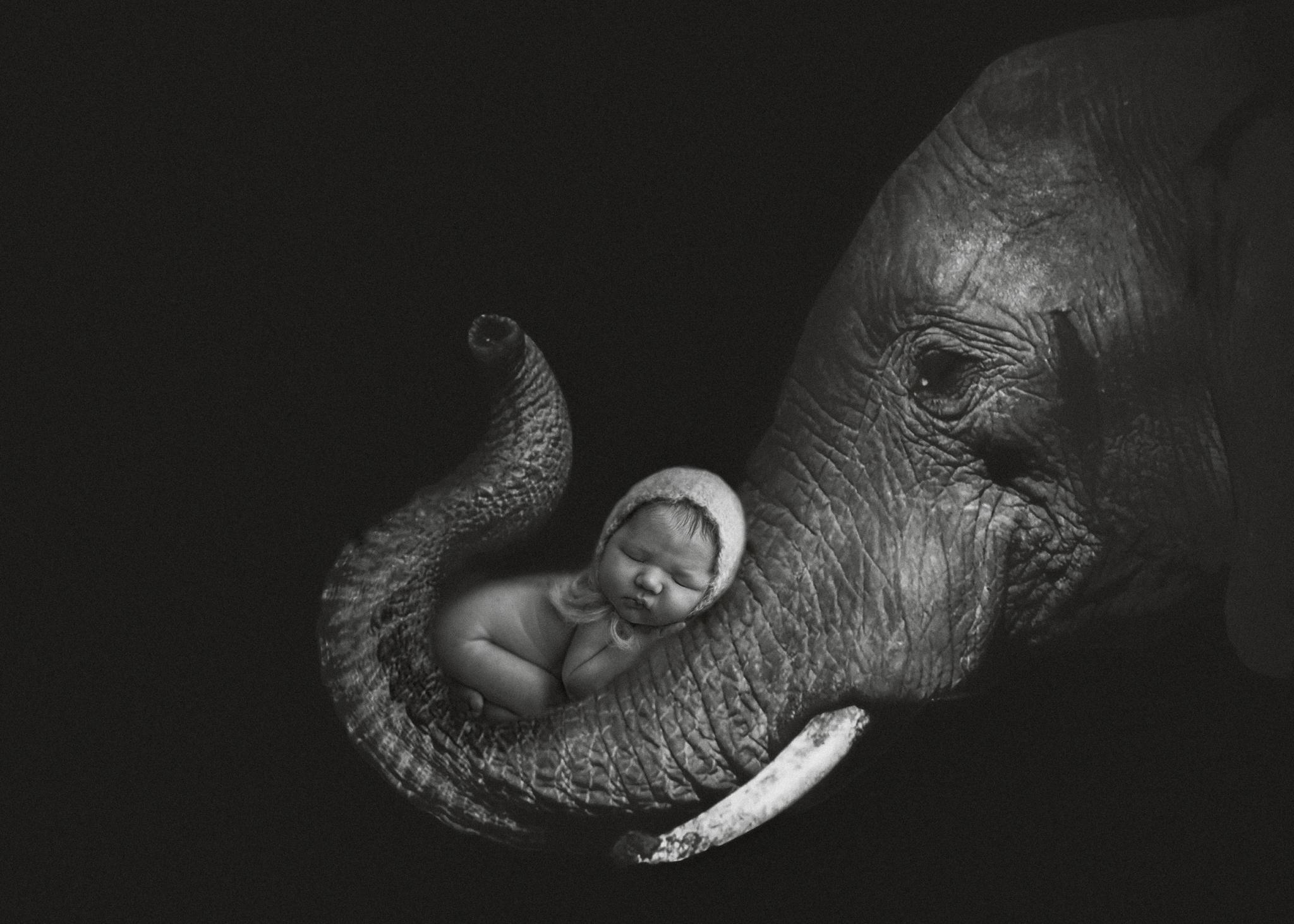 NewbornElephant.jpg