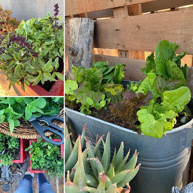 Spring has sprung in the urban herb garden! 🌱