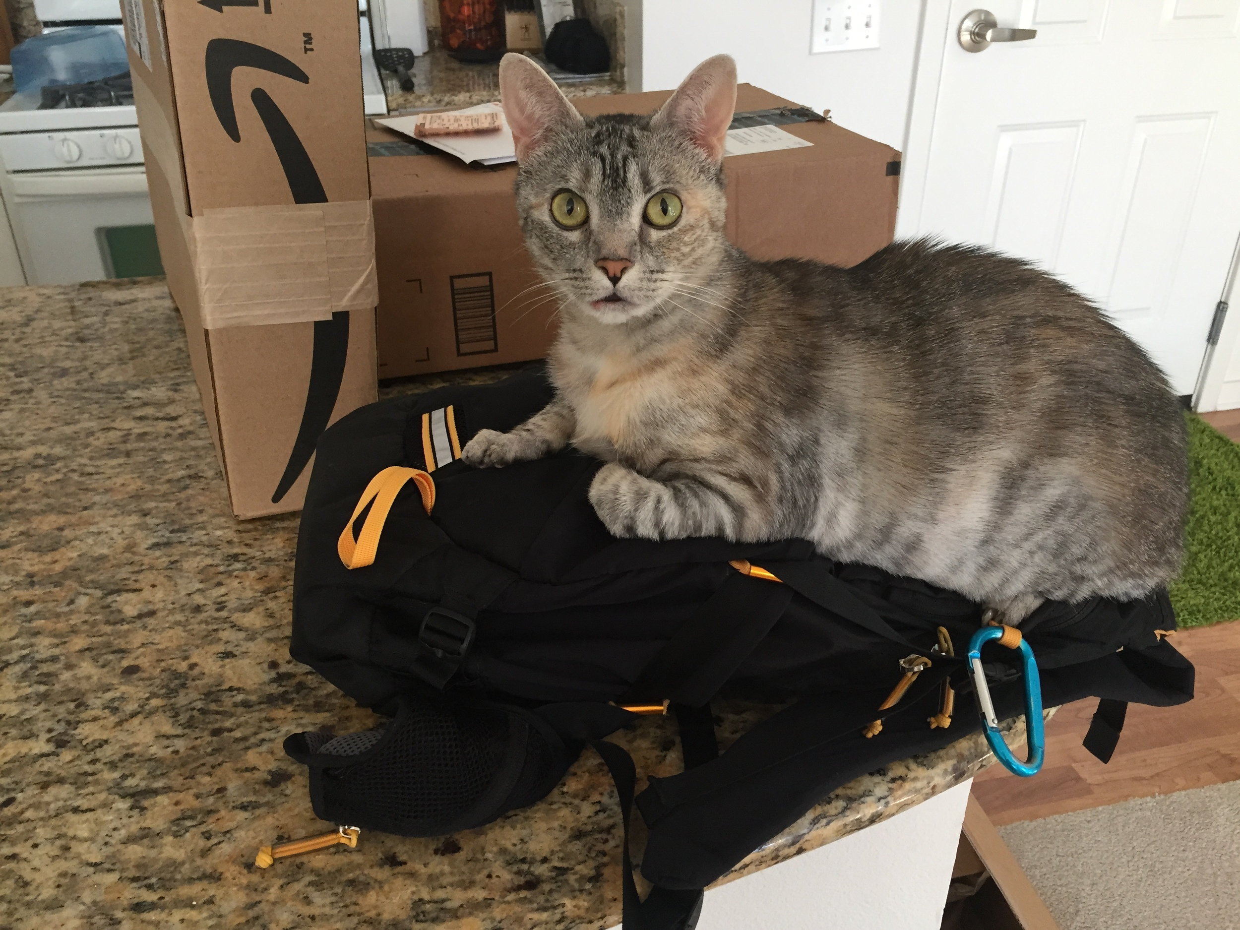 Zoe (our 4 year old Tabby Kitty) loves bags, too!