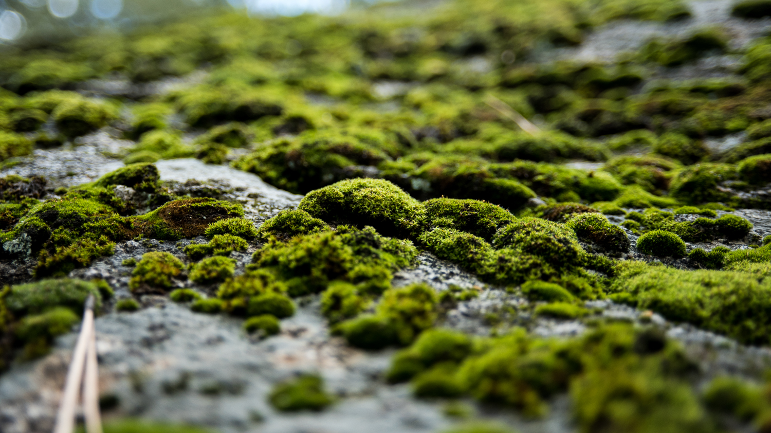 It had rained recently so everything had a damp feel, including some serious moss growth on some of the boulders.