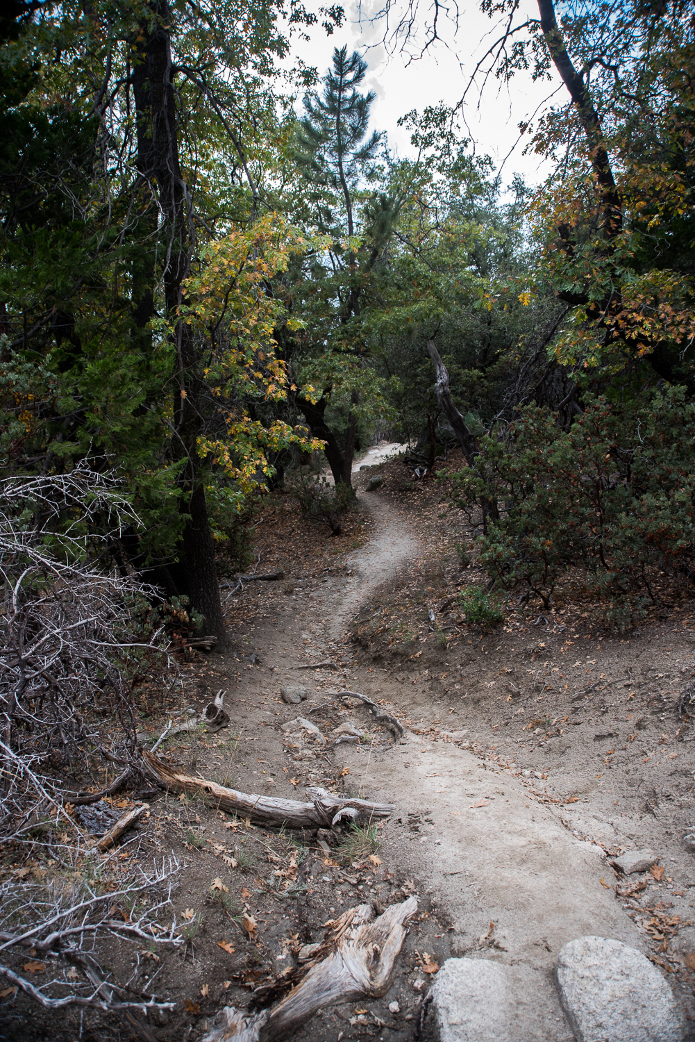 The majority of the trail is single track surrounded by trees and boulders