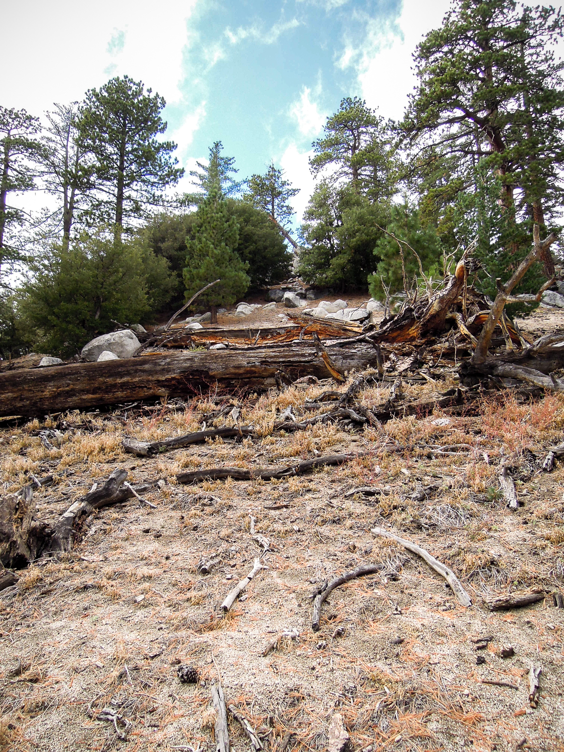 """When you are at the top and have arrived at an open field of pine needles, look up and to your right, this is considered the """"peak"""" and is where the can is hidden"""