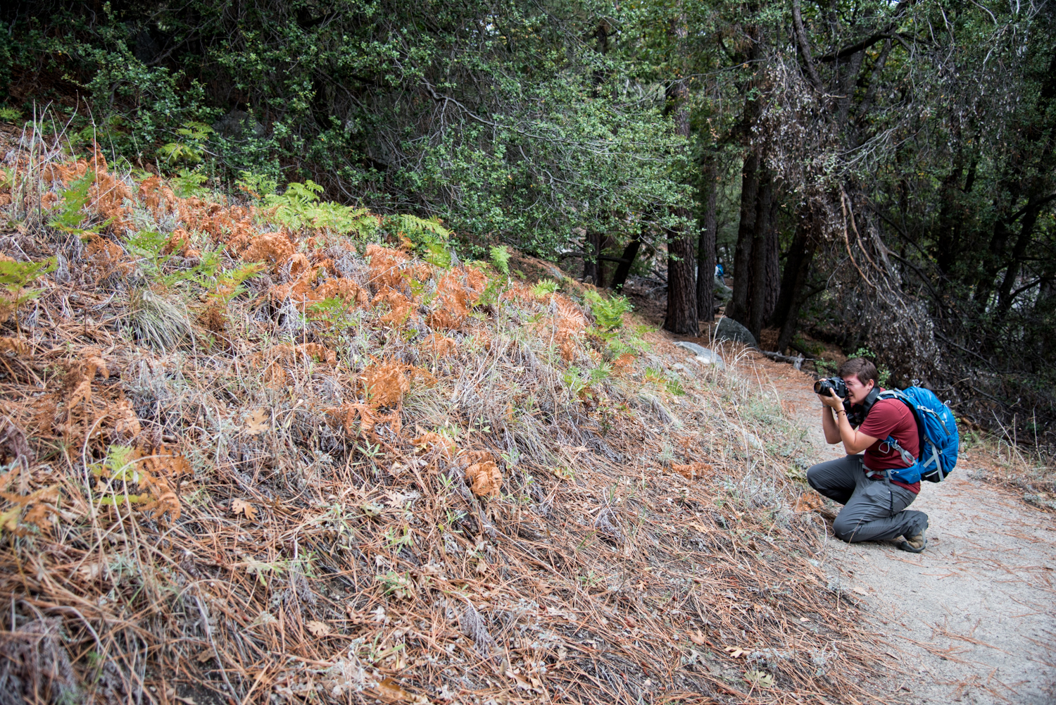 Kim shooting a field of ferns and fallen pine needles