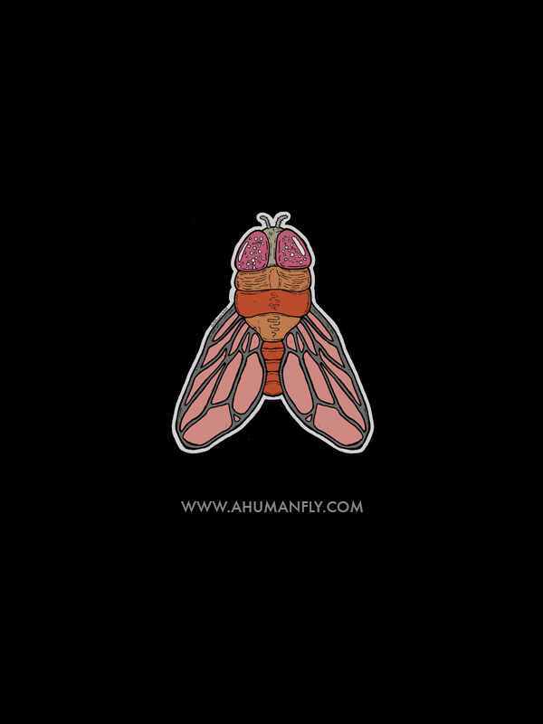 http://www.ahumanfly.com/    (art by  Chris Pyrate )