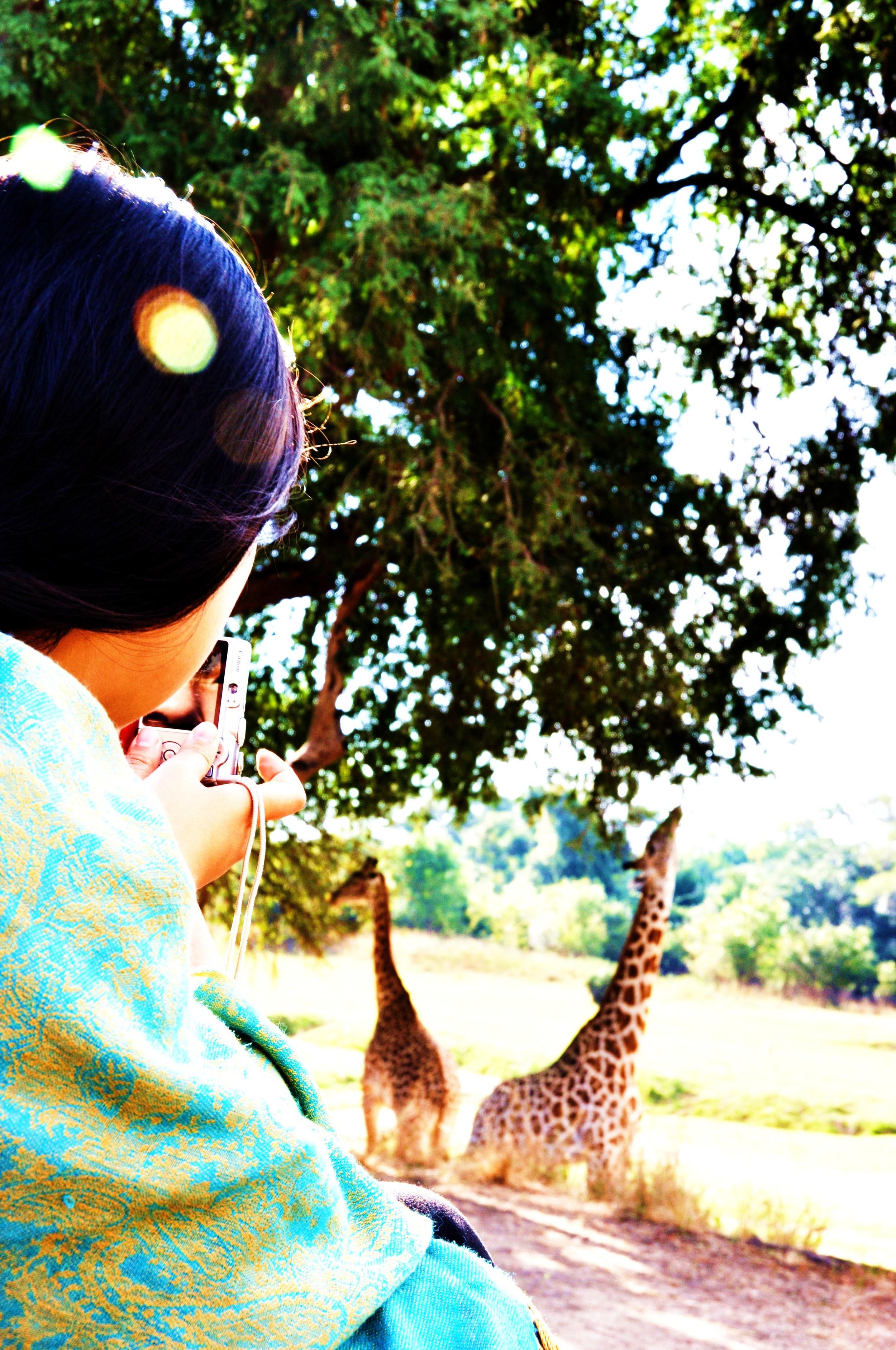 giraffe DSC_0903 (2)B.jpg