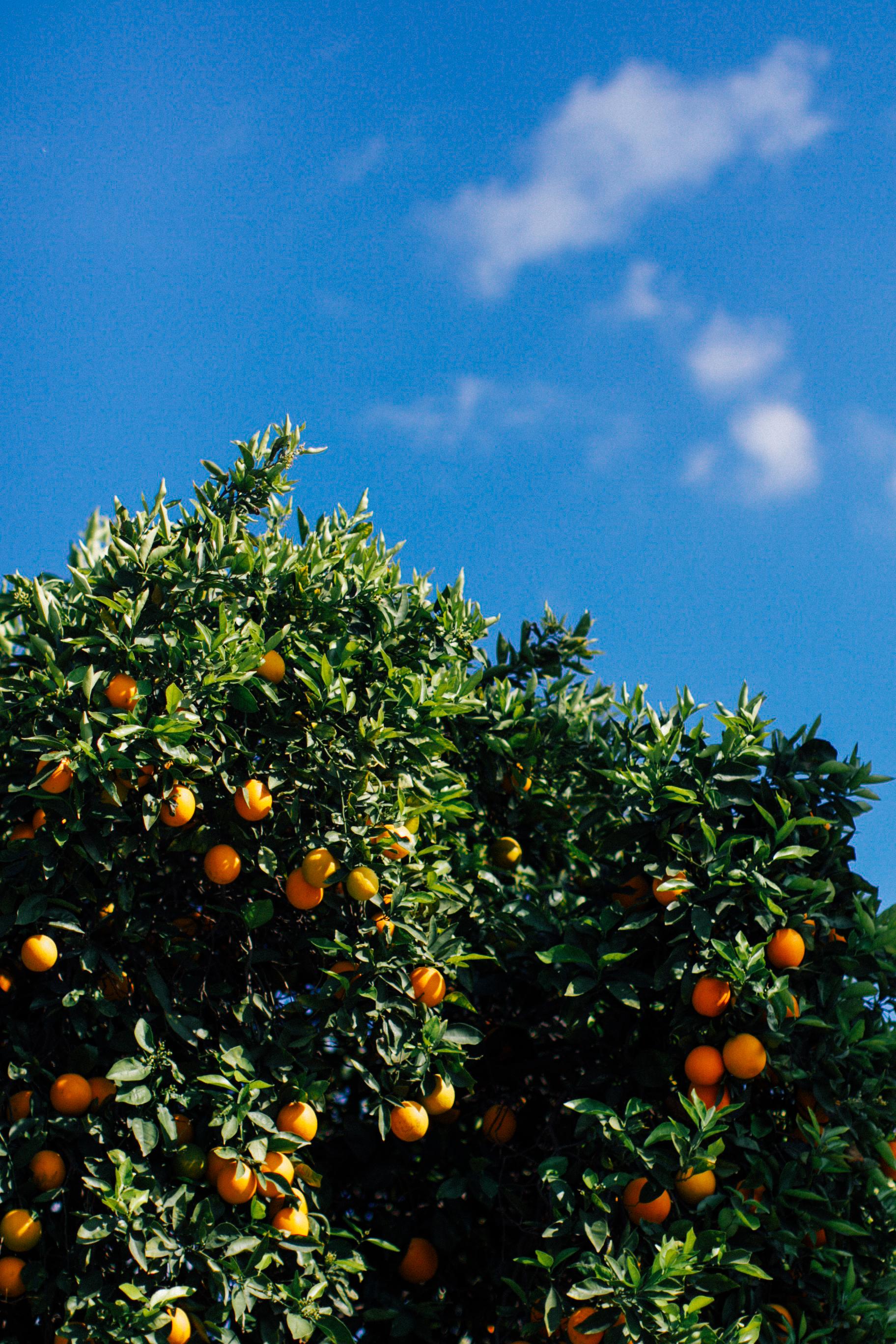 erin morris fruit stand 0017.jpg