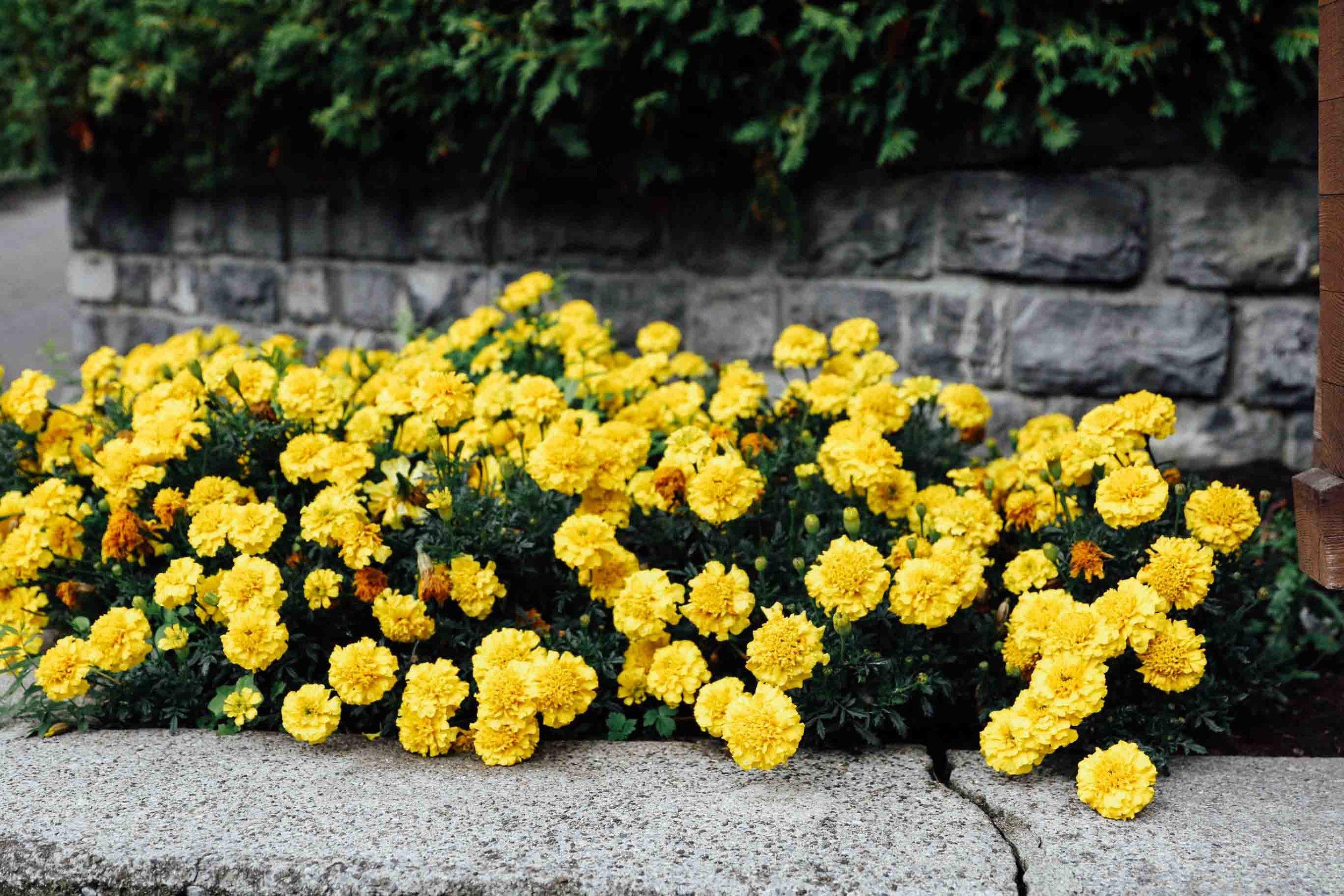lauterbrunnen 0011.jpg