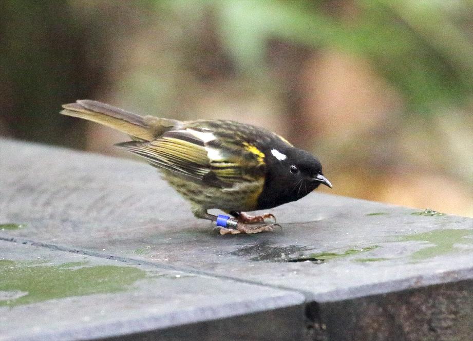 stitchbird 02