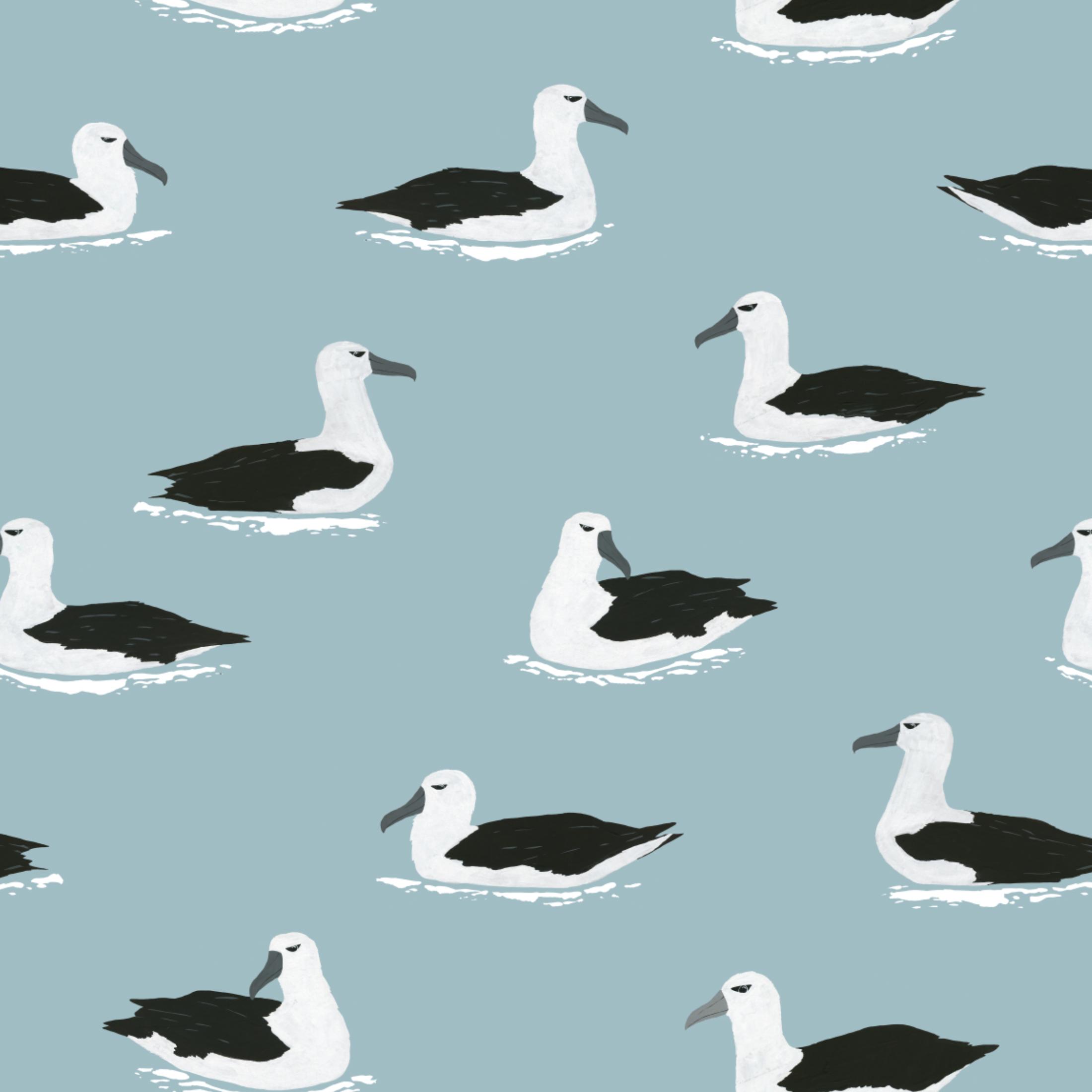 albatross pattern