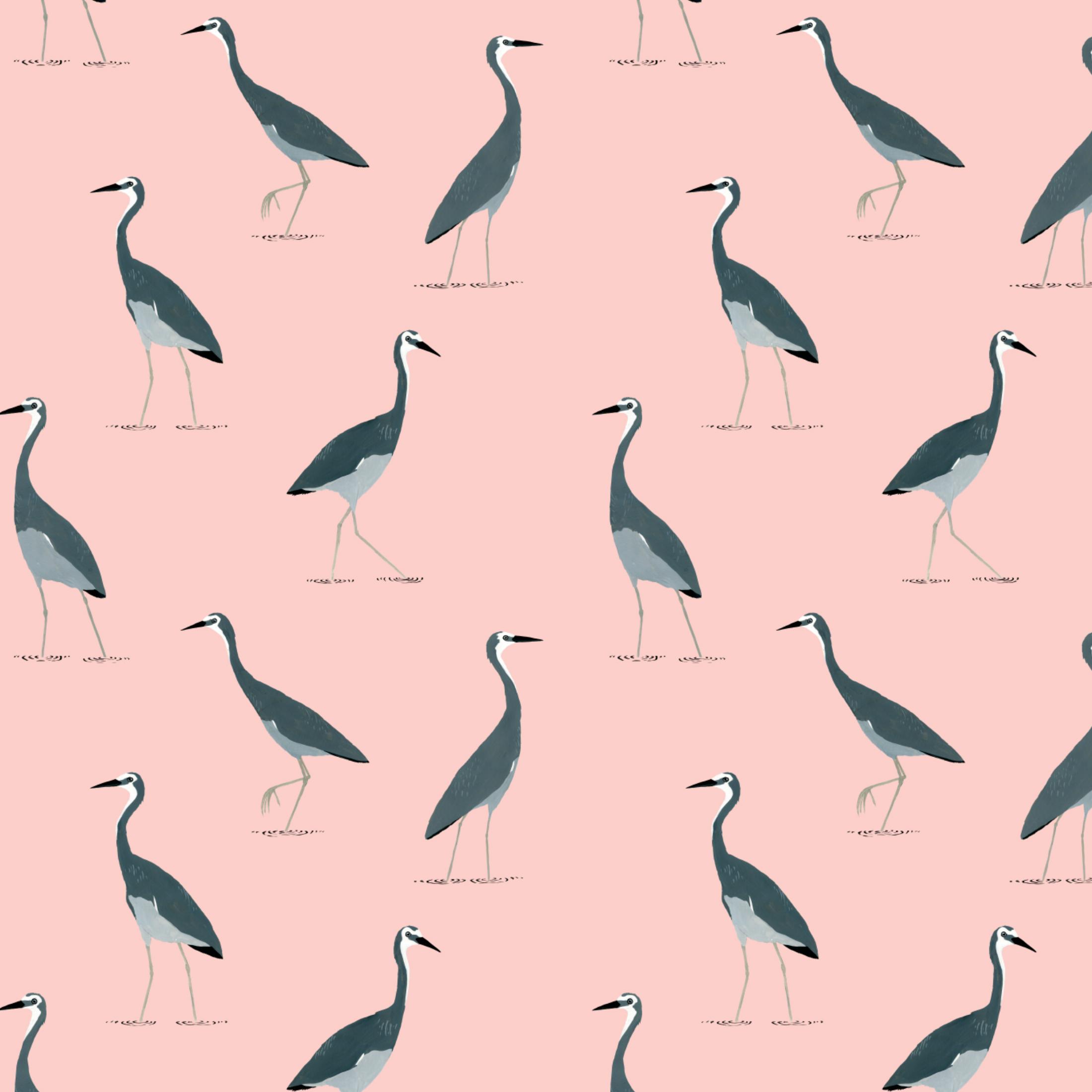 white faced heron pattern