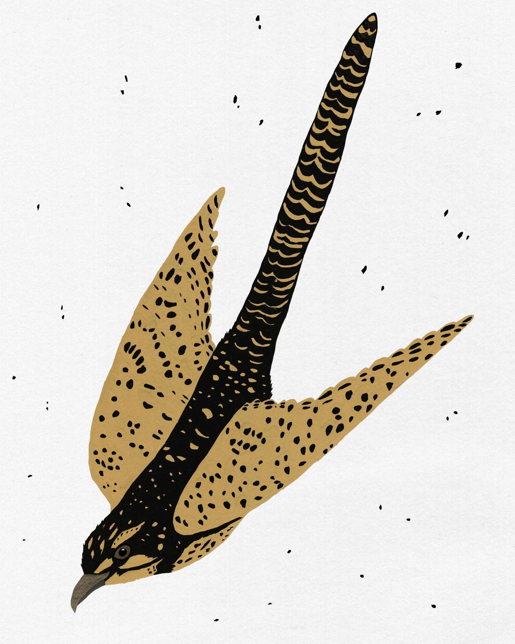 patterned bird series -flying cuckoo