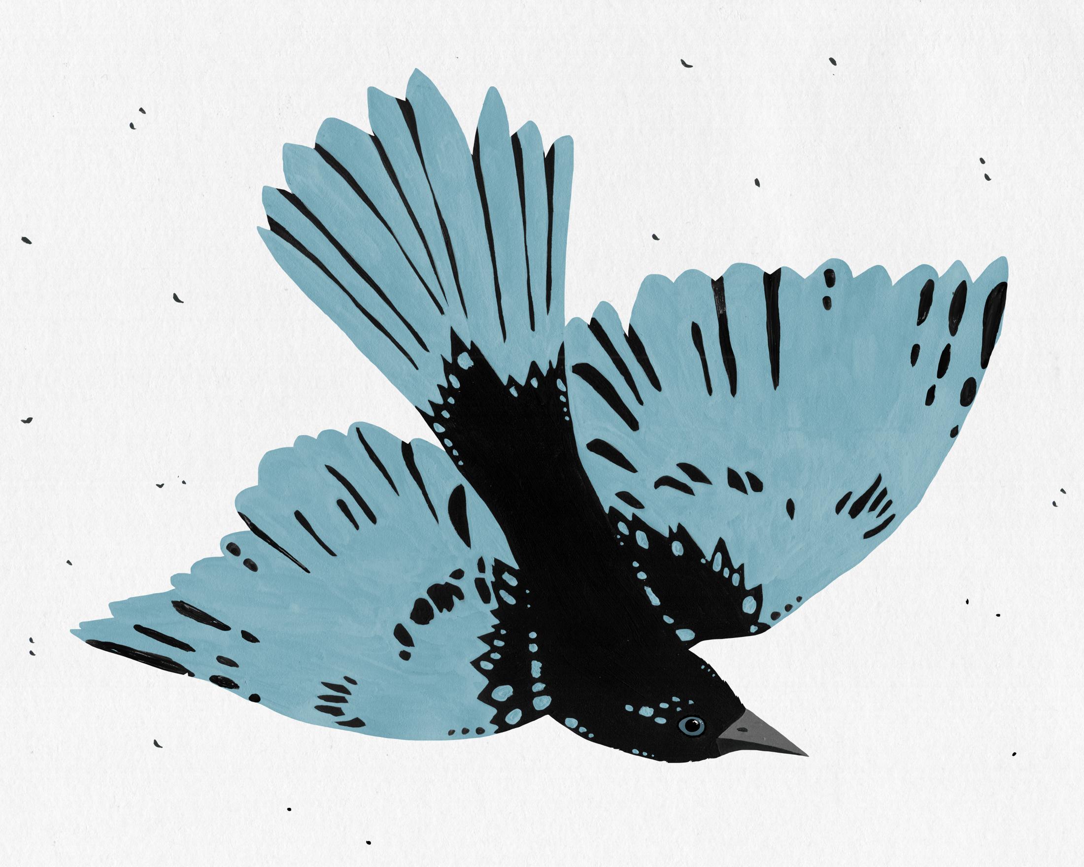 patterned bird series -bluebird
