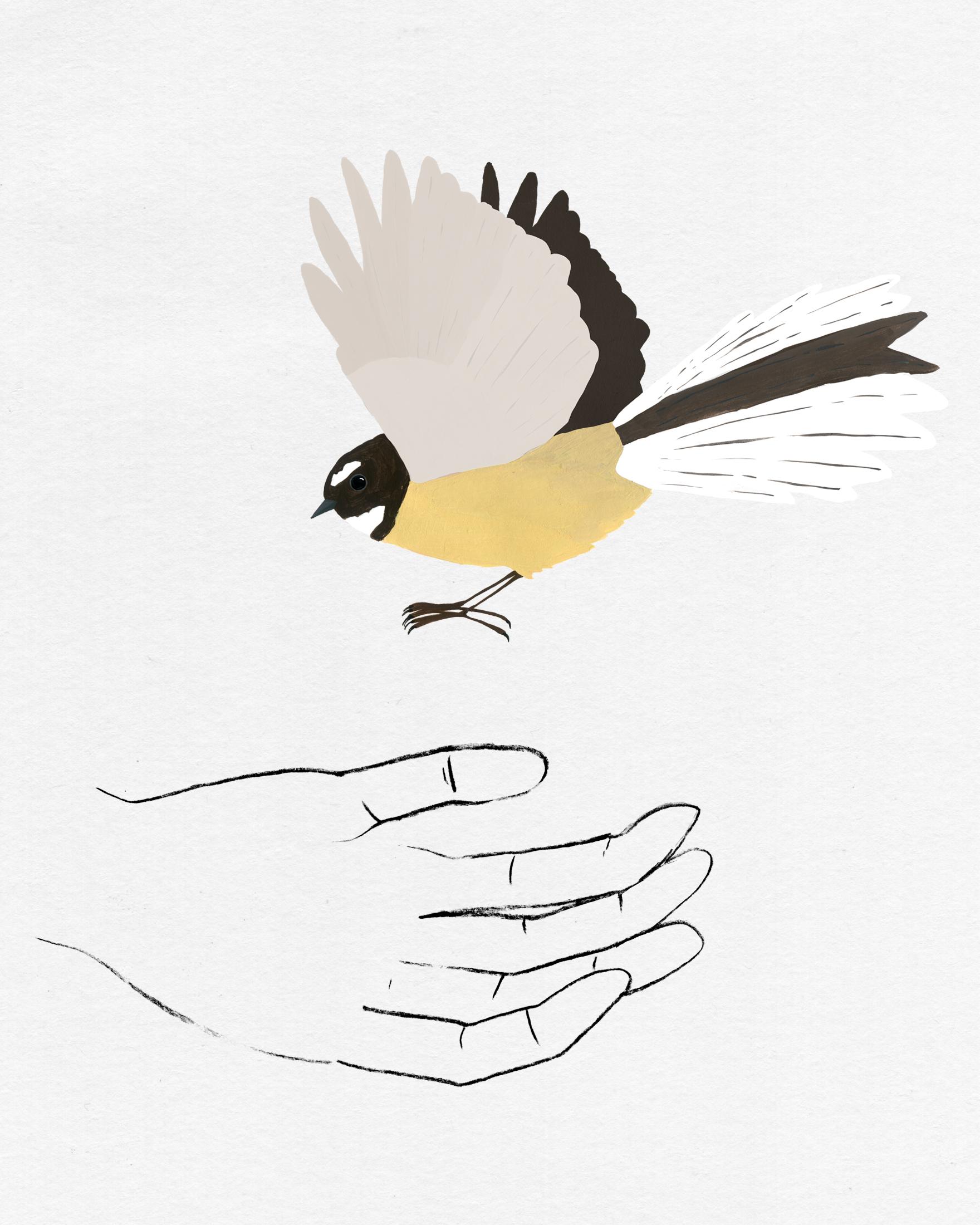 bird in hand series - fantail