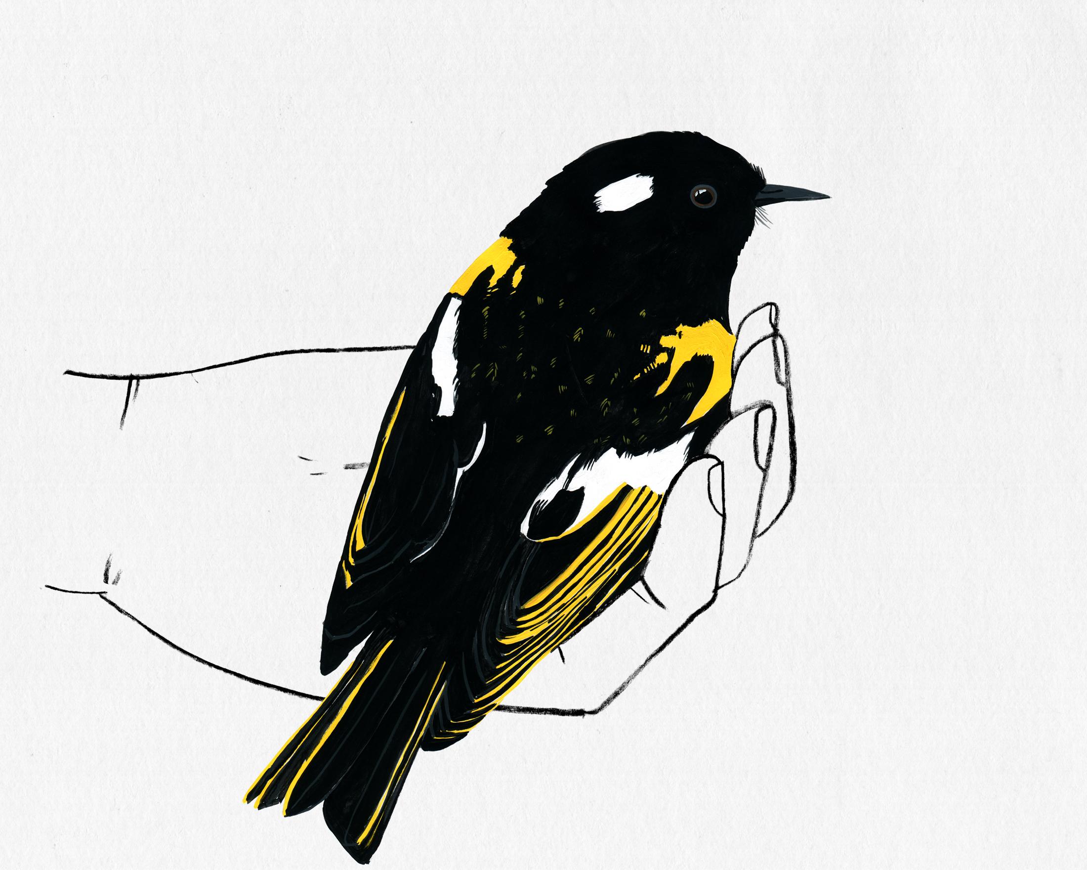 bird in hand series - stitchbird