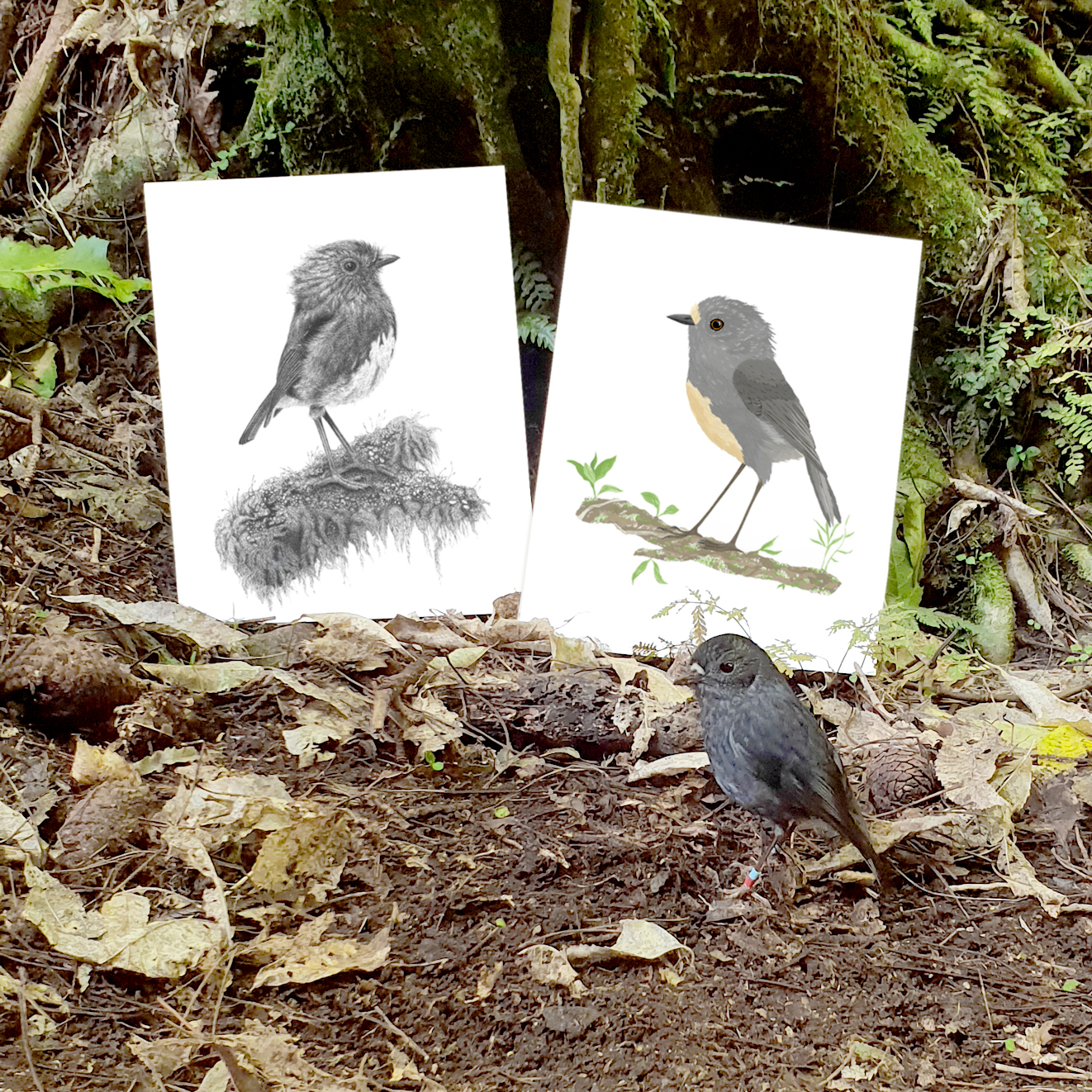 A little Robin posing in front of our prints!! I think he approves!