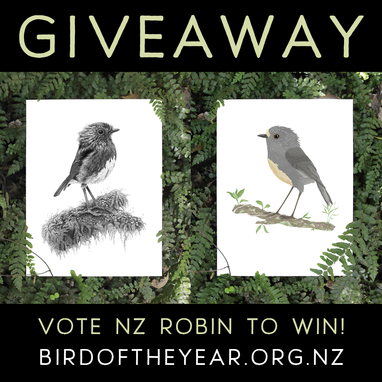 bird of the year nz robin.jpg