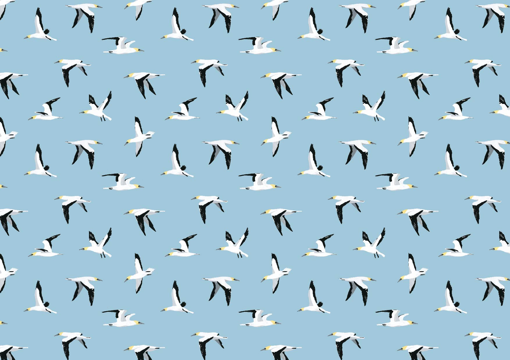 gannet-pattern-wrapping-paper.jpg