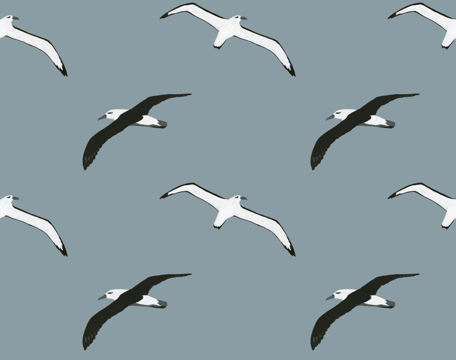 melissa boardman flying albatross pattern.png