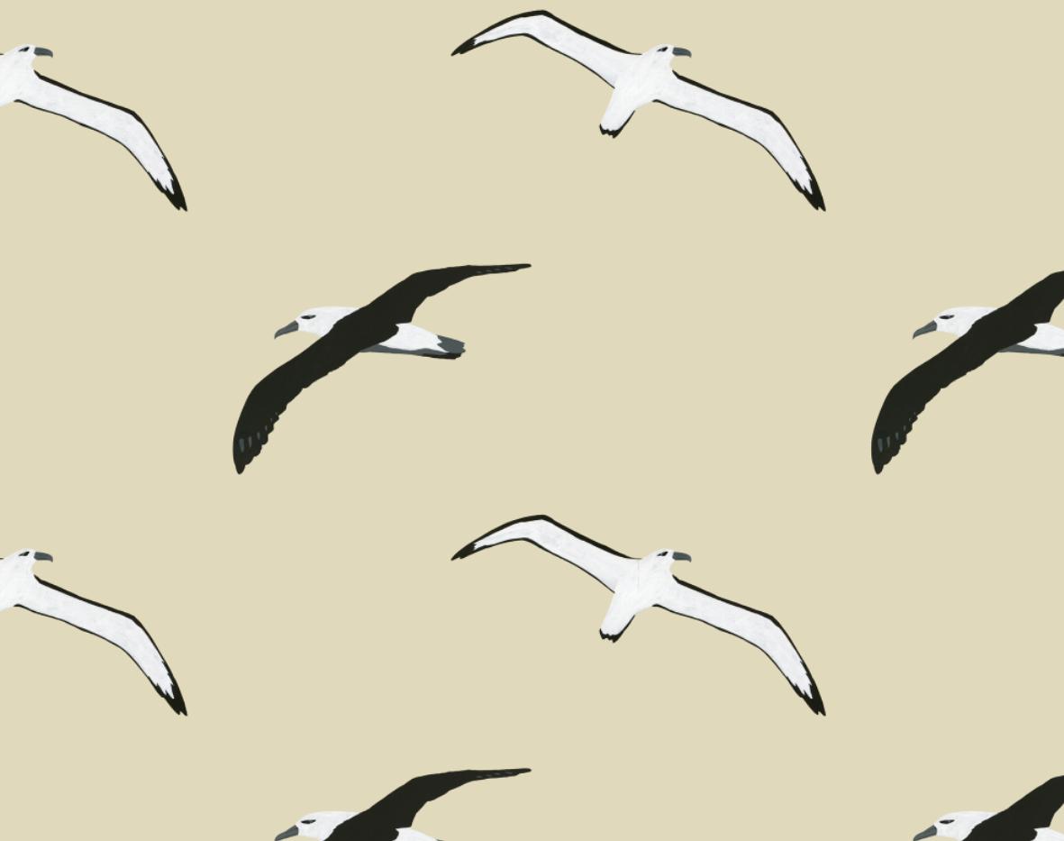 melissa boardman flying albatross pattern neutral.png