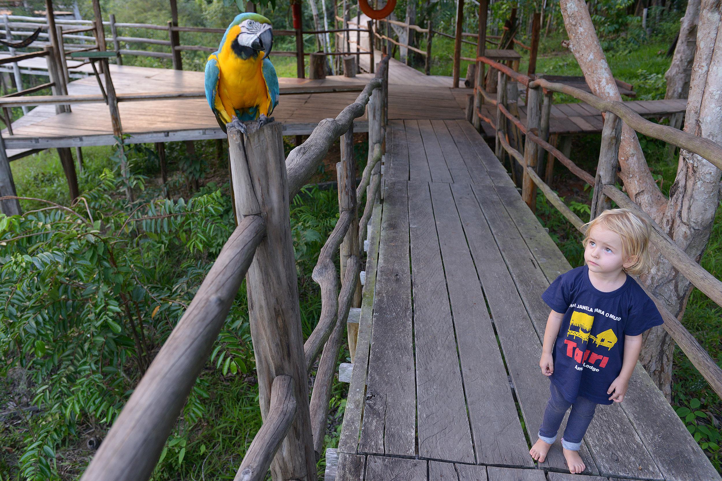 Papukaija tyttö Amazon Brasilia