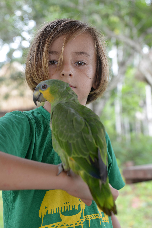 Papukaija Amazon Brasilia