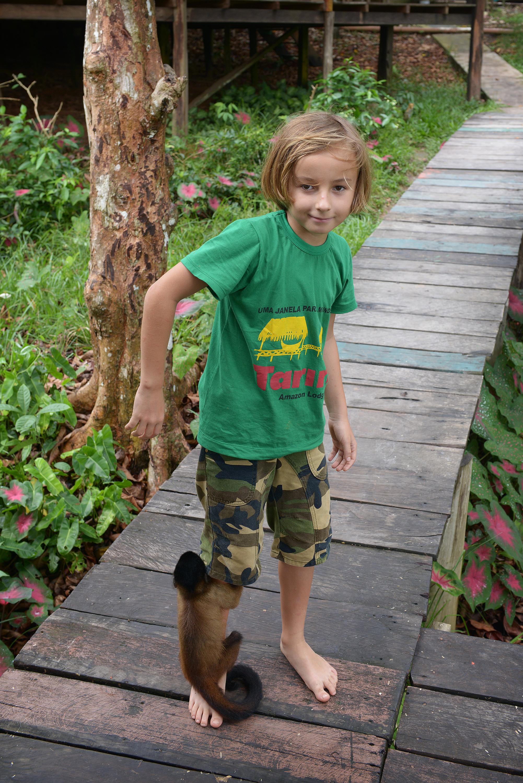 Apina jalassa Brasilia Amazon