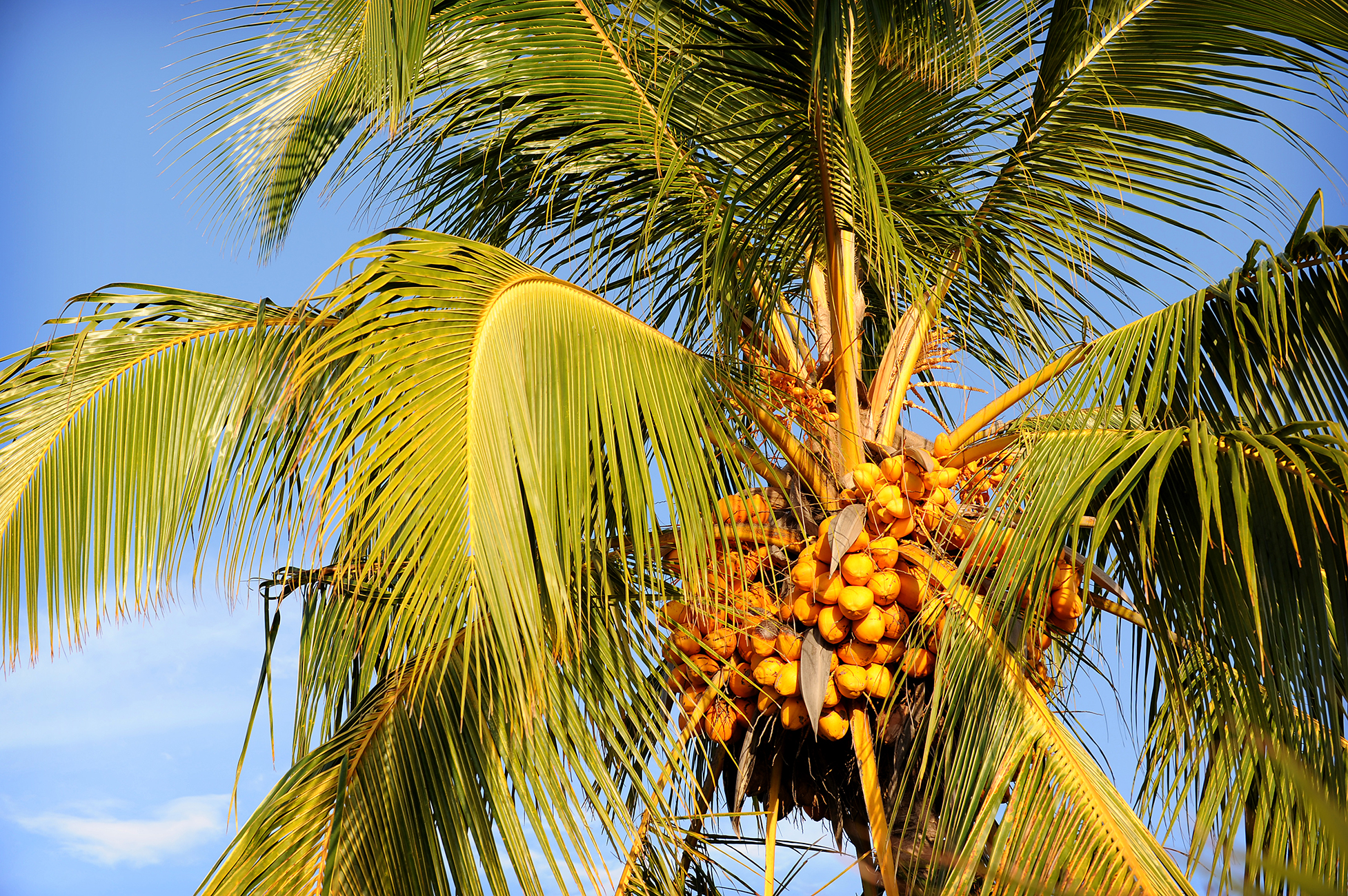Palmu, loma, matka, matkablogi, lomamatka, kookos
