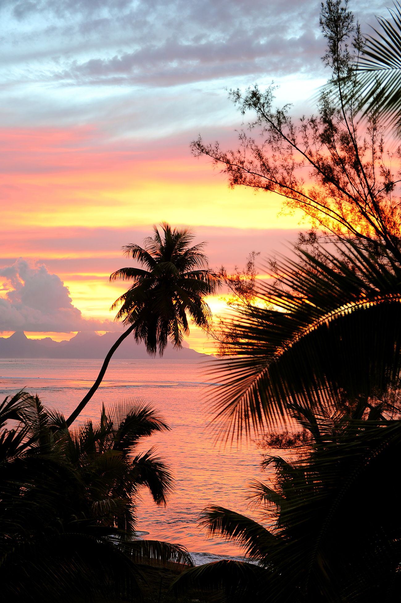 Auringonlasku, palmu, ilta, maktablogi, matka, Fidzi