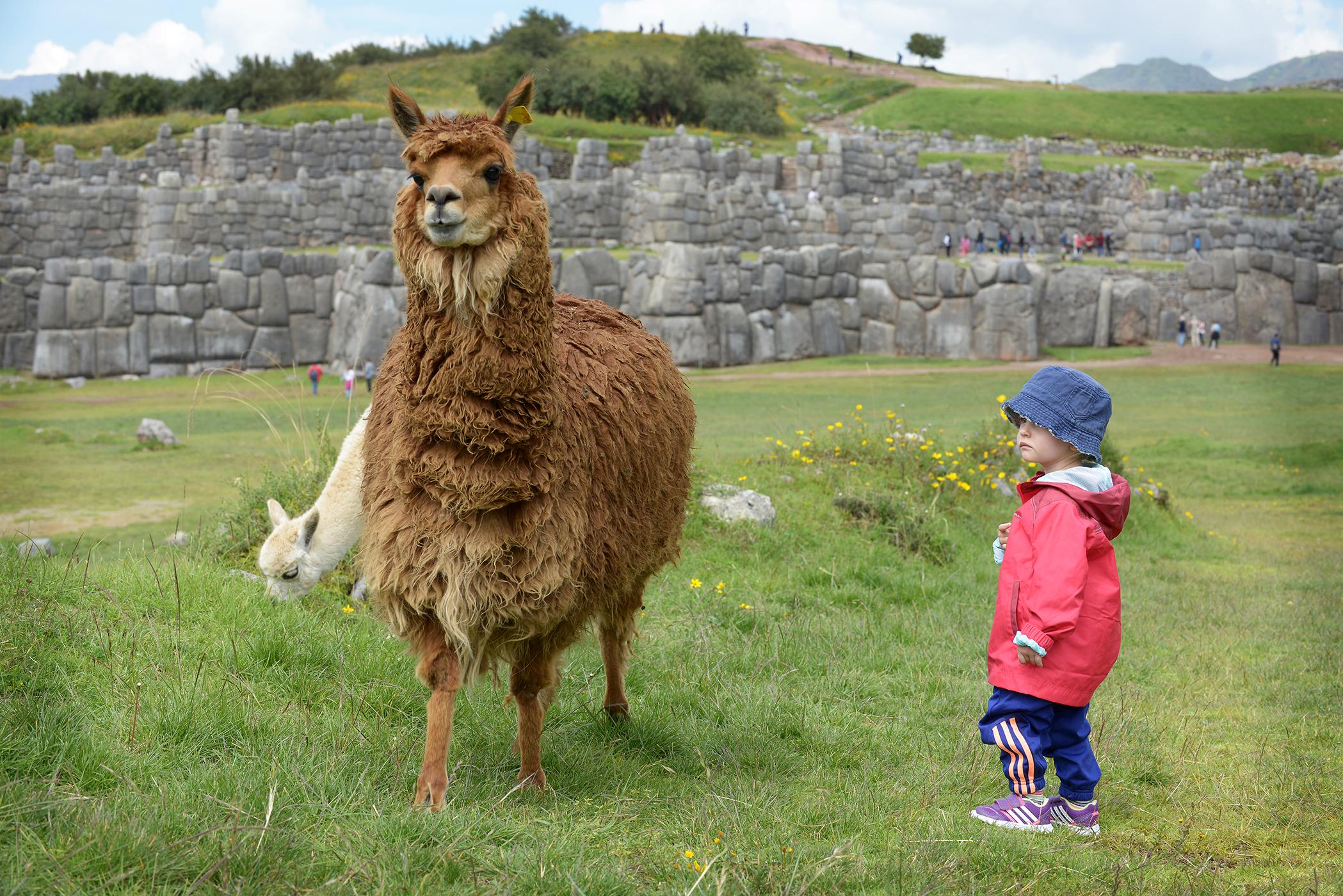 Peru, Etelä-Amerikka, perhematkailu, lapsiperhematkailu, matkablogi, matka, reissu, kerran elämässä, laama