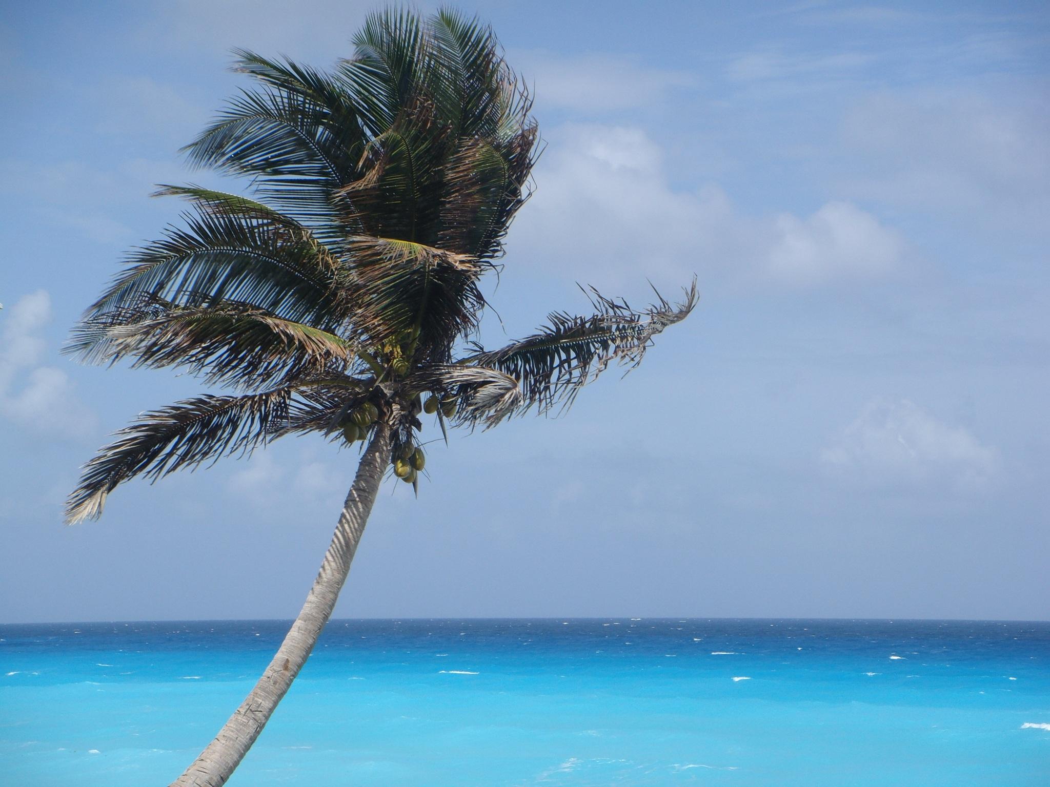 palm-tree-734078.jpg