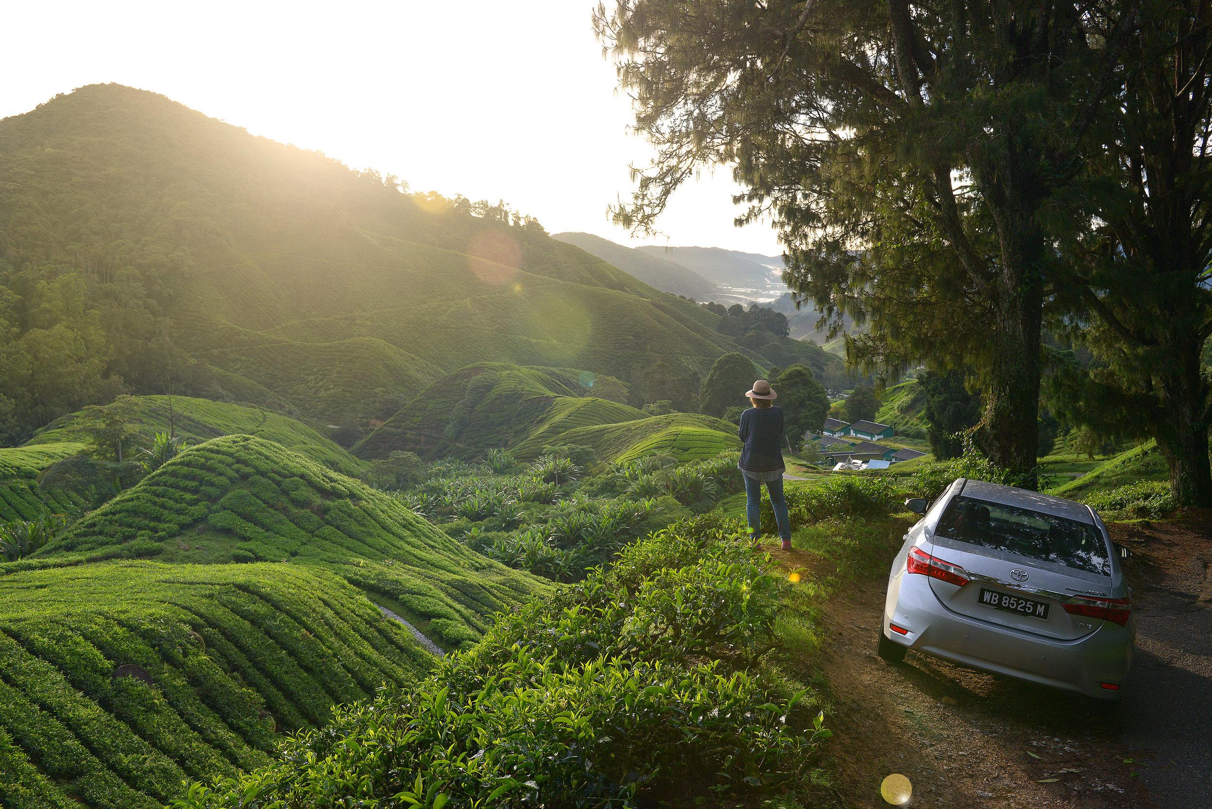 Malesia, Aasia, roadtrip, Cameron Highlands, tee, teeplantaasi