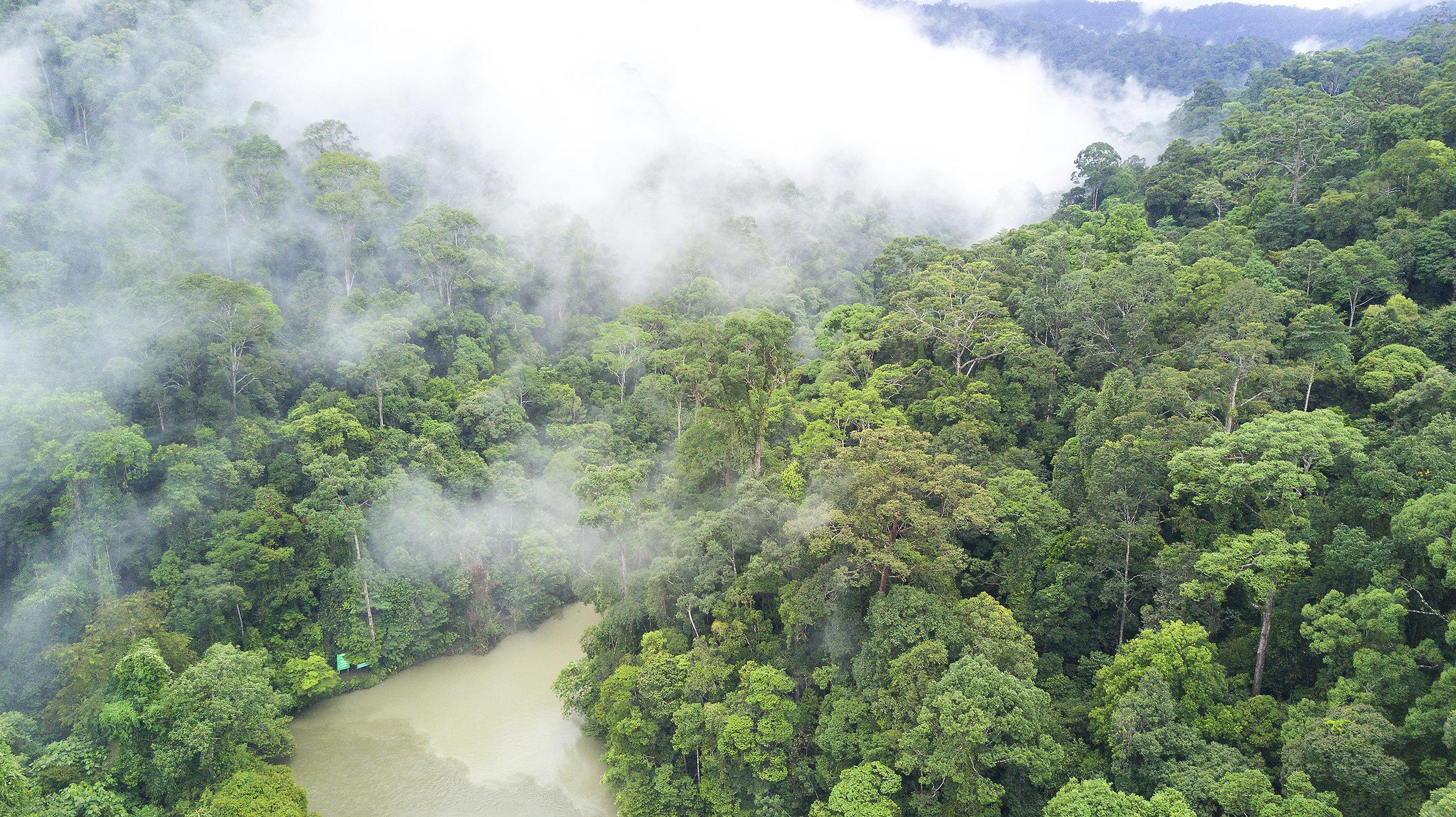 Brunei, Ulu Ulu National Park, sademetsä