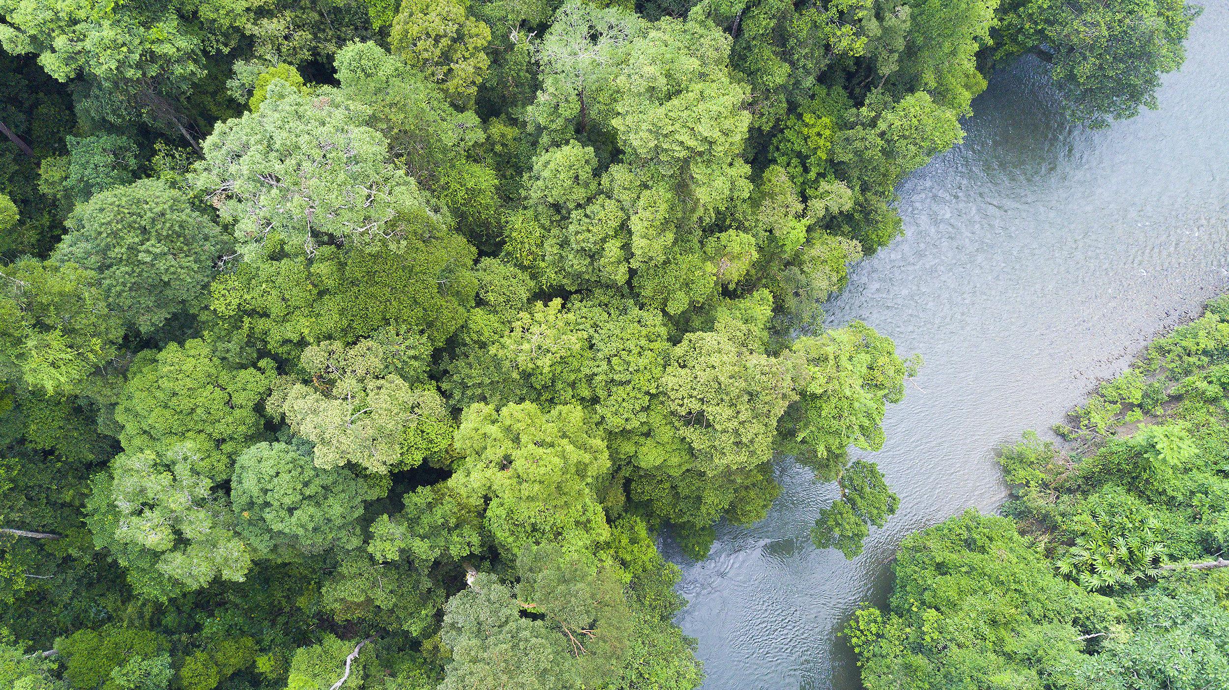 Brunei, Ulu Ulu National Park, sademetsä, kansallispuisto