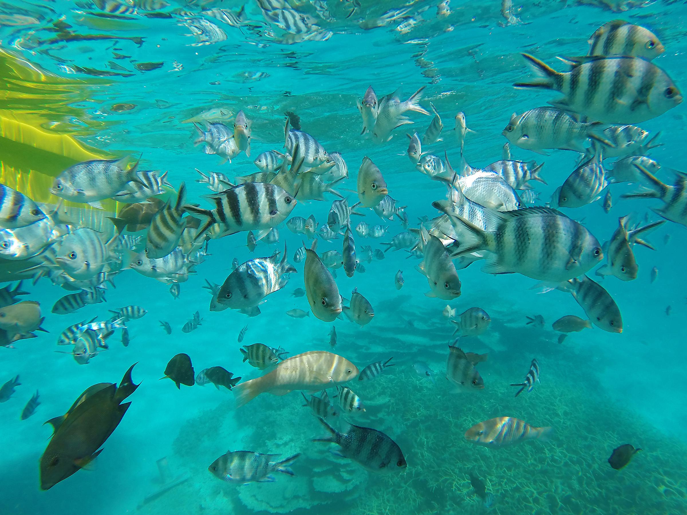Mauritius, kaloja, snorkkelointi