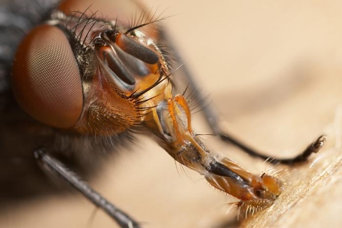 Via:http://bogleech.com/nature/fly-house.jpg