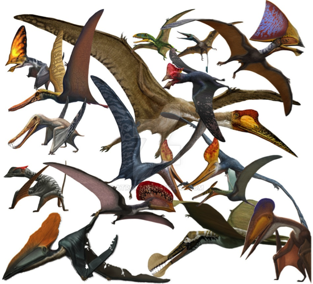 Via:http://img03.deviantart.net/f23e/i/2015/108/5/2/pterosaurs_by_atrox1-d757xt2.jpg