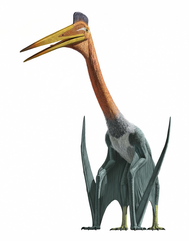 Via:http://psnt.net/blog/wp-content/uploads/2014/12/quetzalcoatlus.jpg