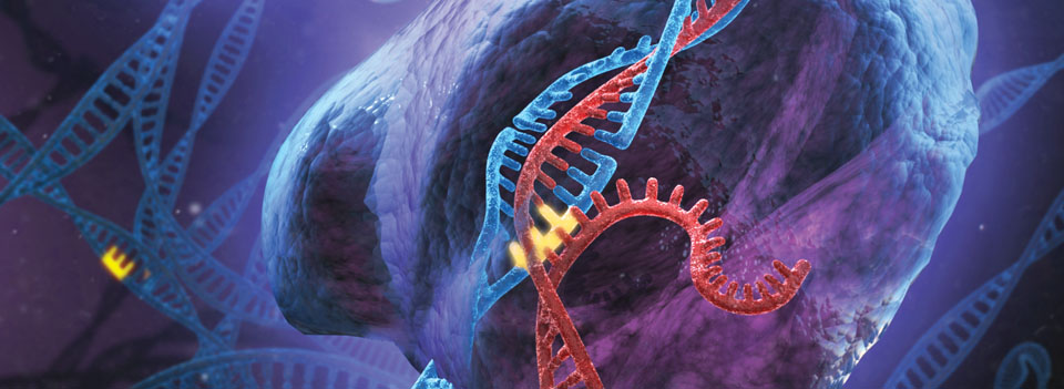Via:http://www.genome-engineering.org/crispr/wp-content/uploads/2013/01/banner_short.jpg