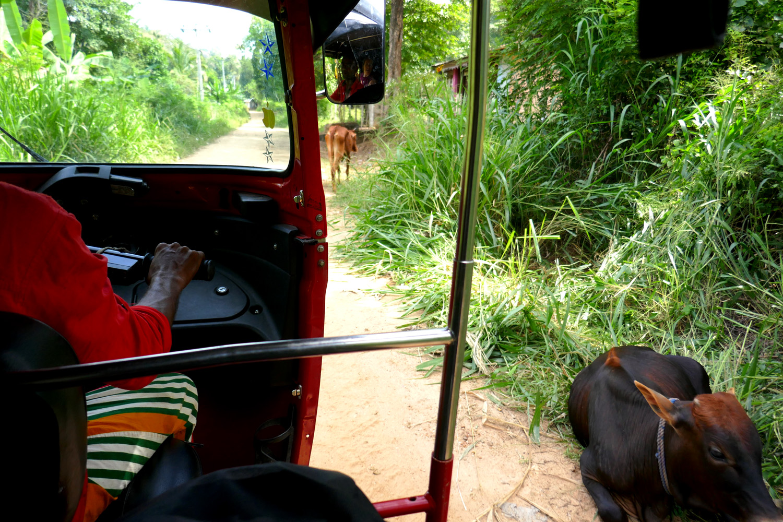 hasalaka_duara_tuktuk.jpg