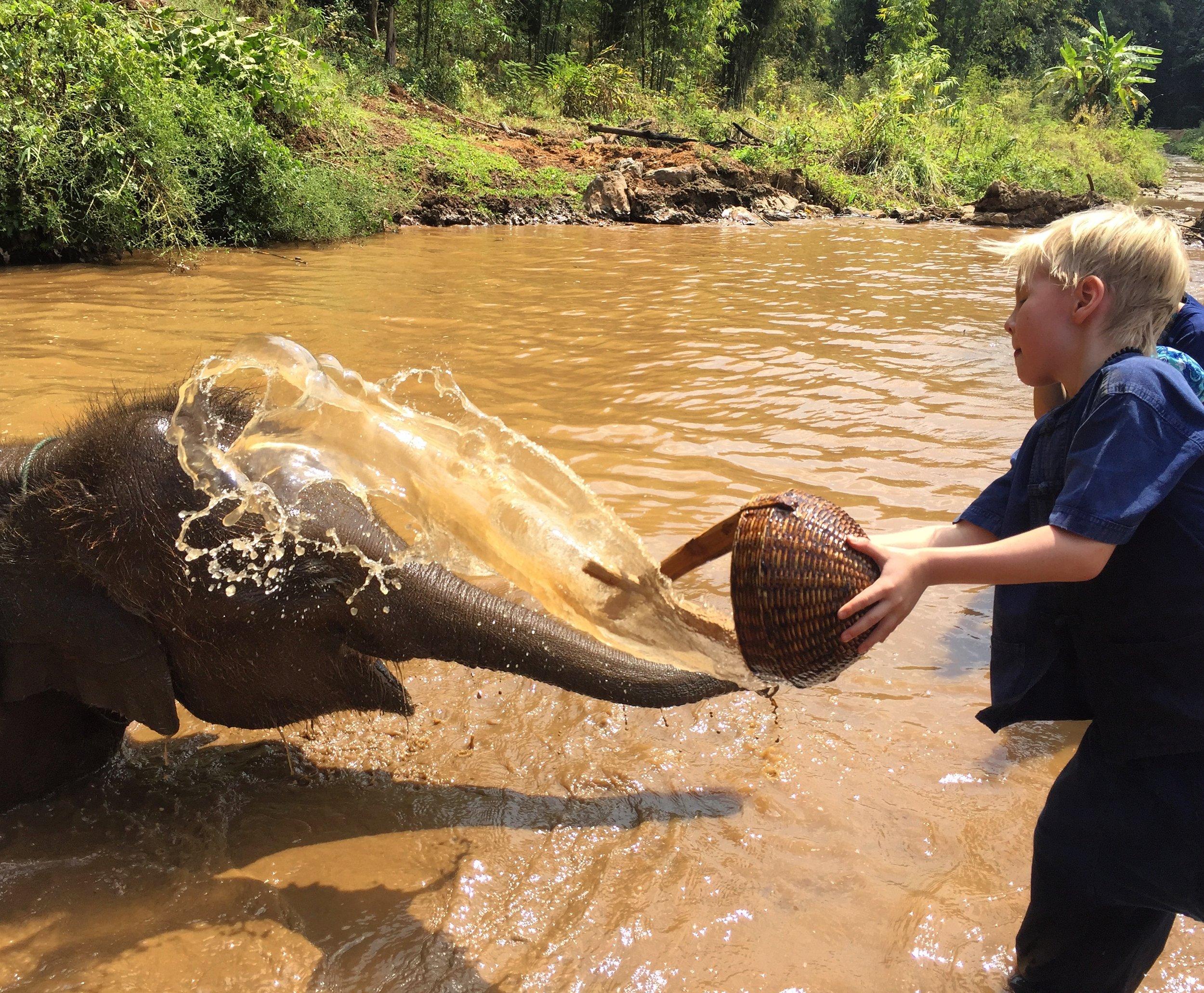 elephant_sanctuary_maetaeng.jpg