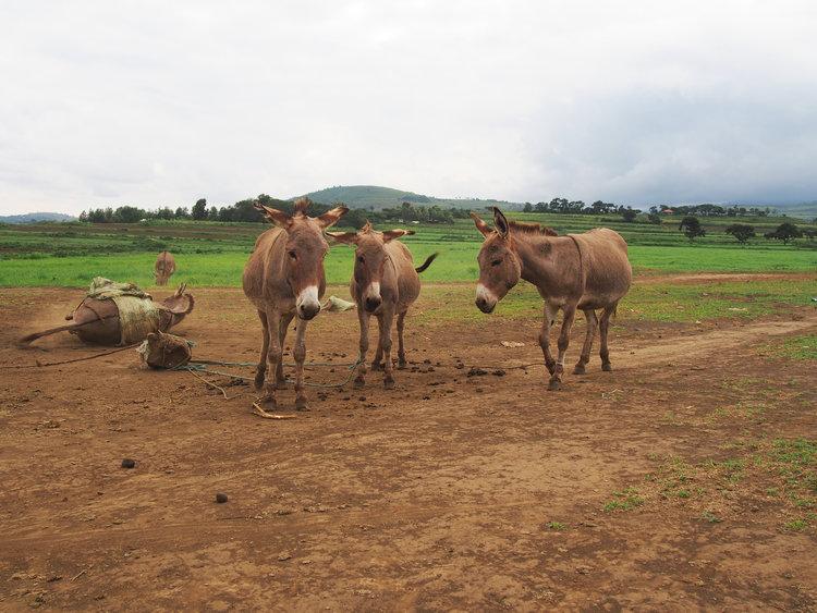 Arusha_farmlife.jpg