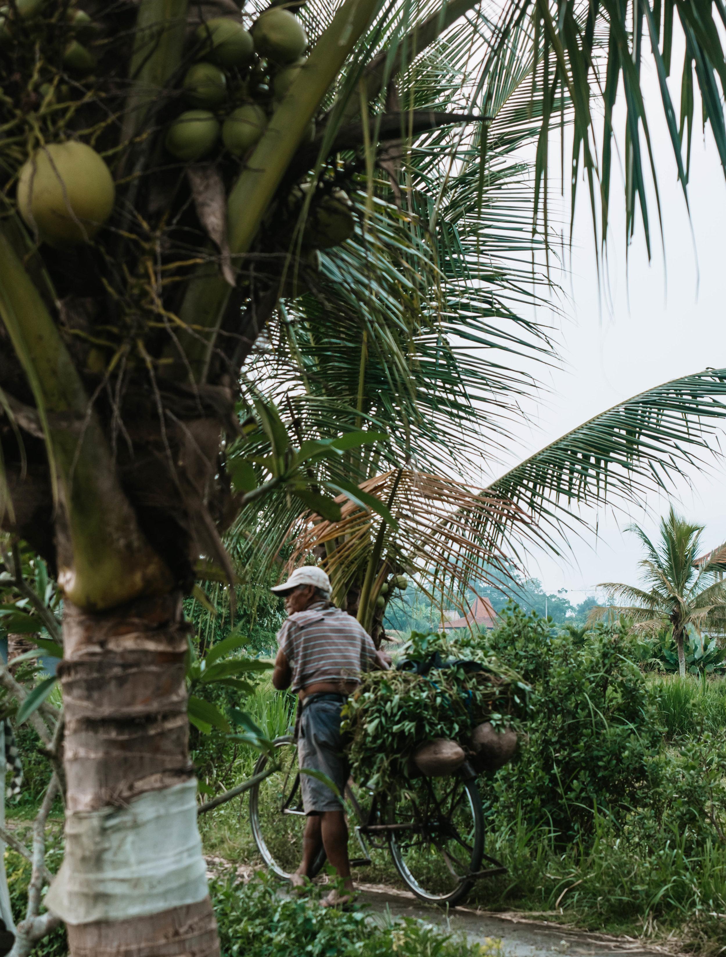 Bali authentic life