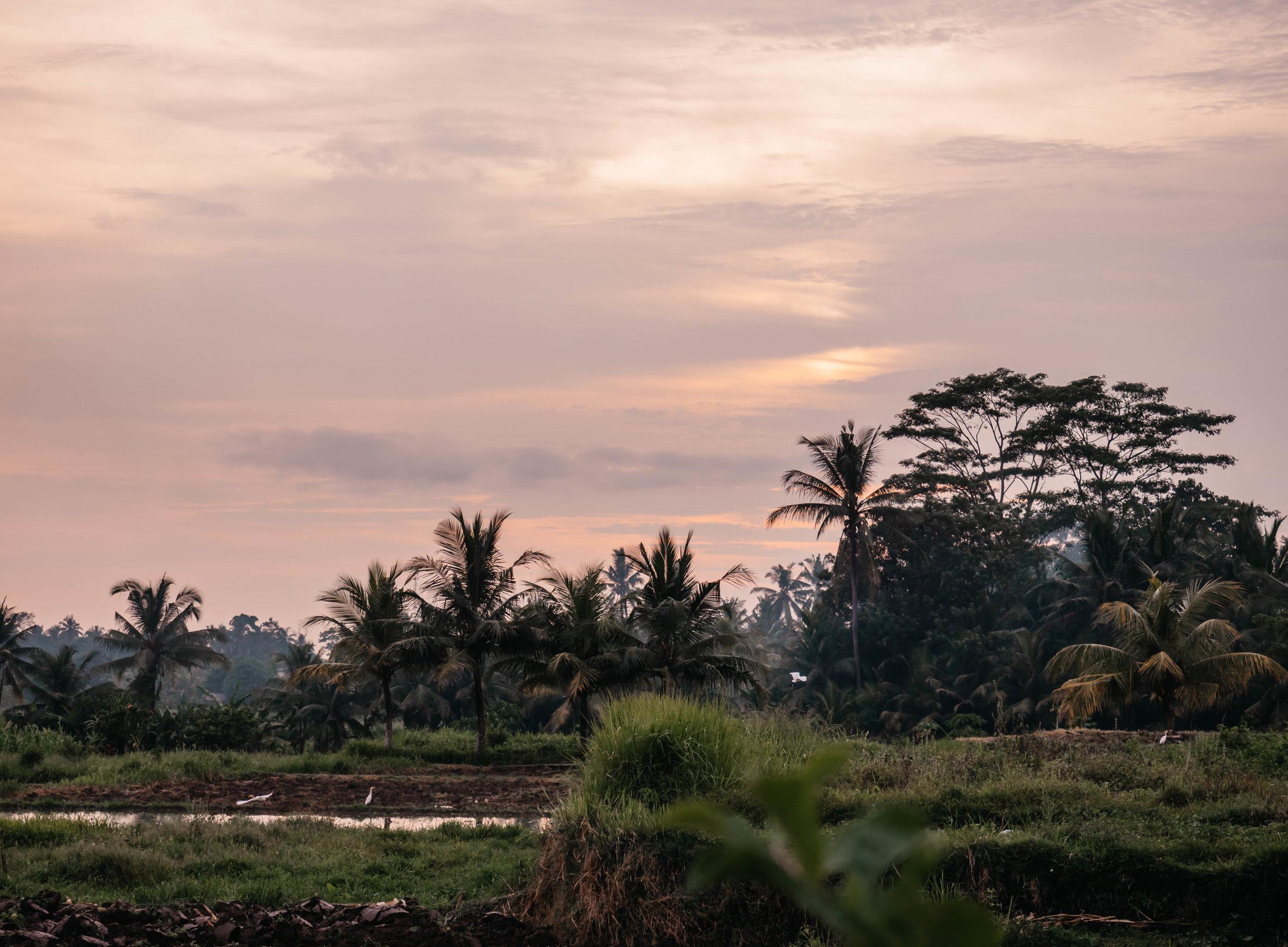 Bali_countryside.jpg