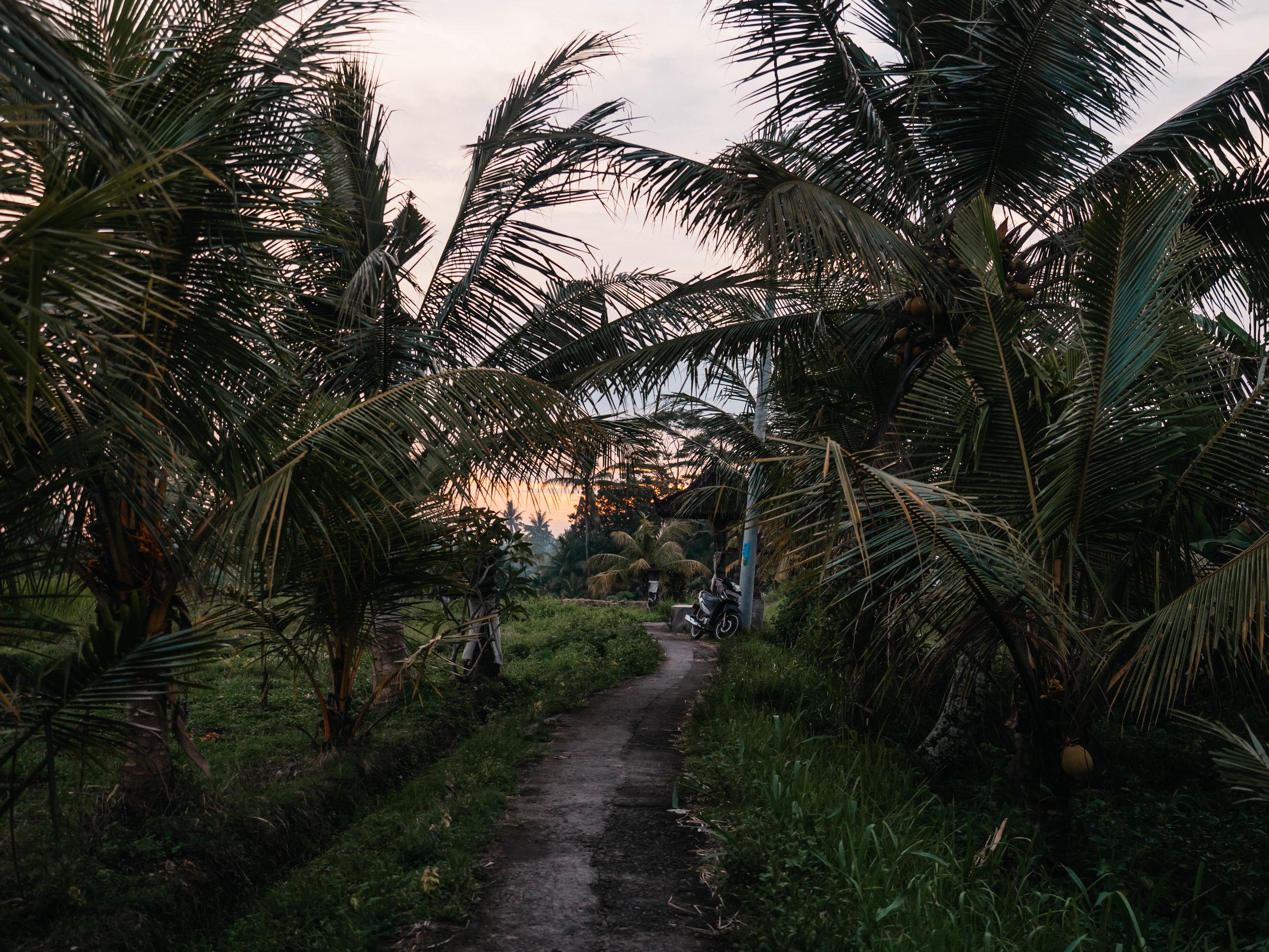 Bali_rural_village.jpg
